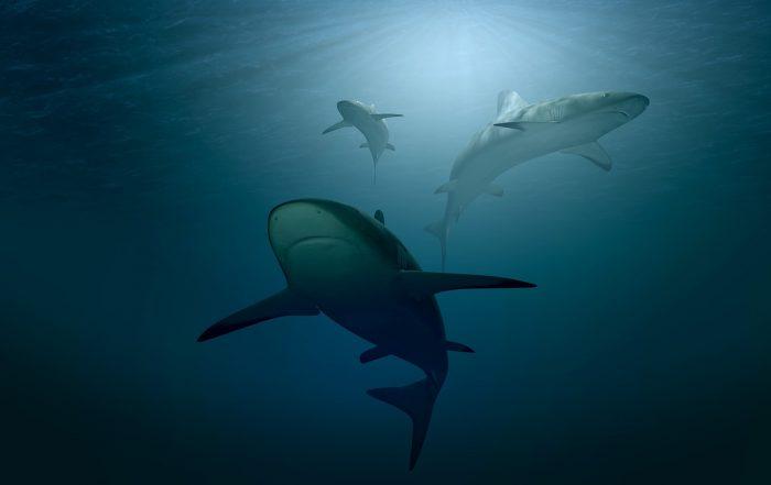 estudio sobre tiburones lonja